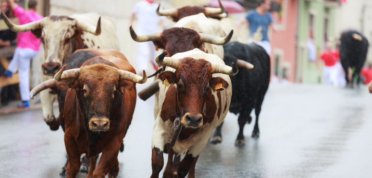 PAMPLONA, SPAIN - JULY Bulls and people are running in street during festival in SAN FERMIN, celebrated in PAMPLONA, Spain