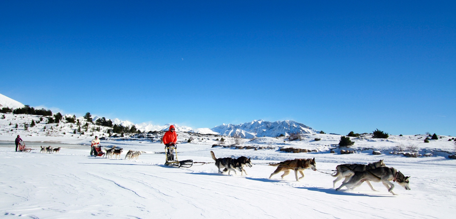 winter-mushing
