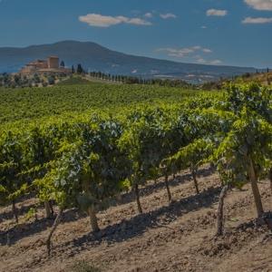 Vineyard in the hills
